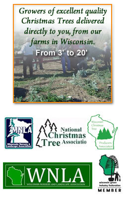 Growers of Quality Christmas Trees in Wisconsin