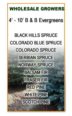 Wholesale Growers of Evergreens in Wisconsin